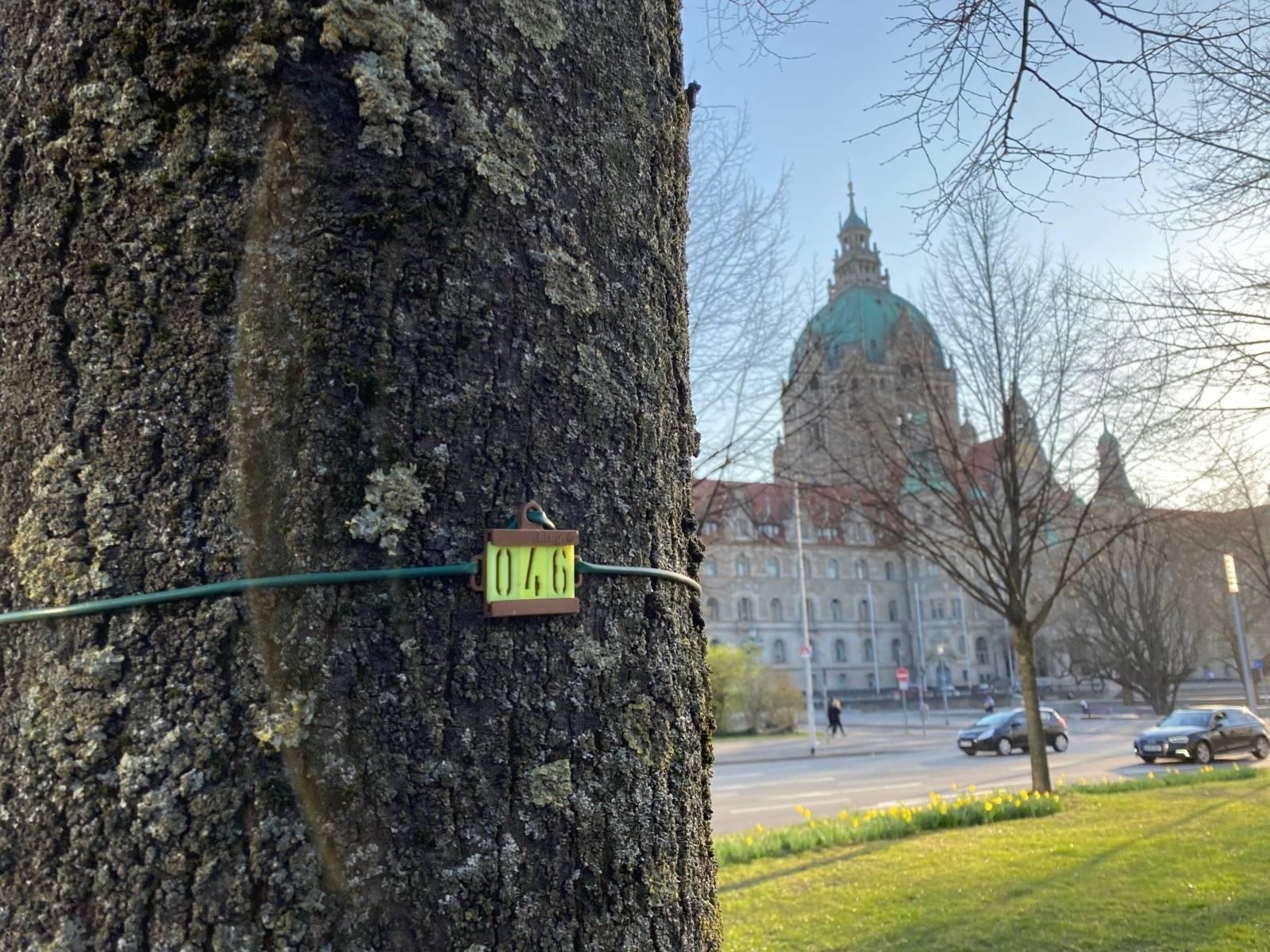 Ein Baumstamm mit einer Nummer. Im Hintergrund das Neue Rathaus.