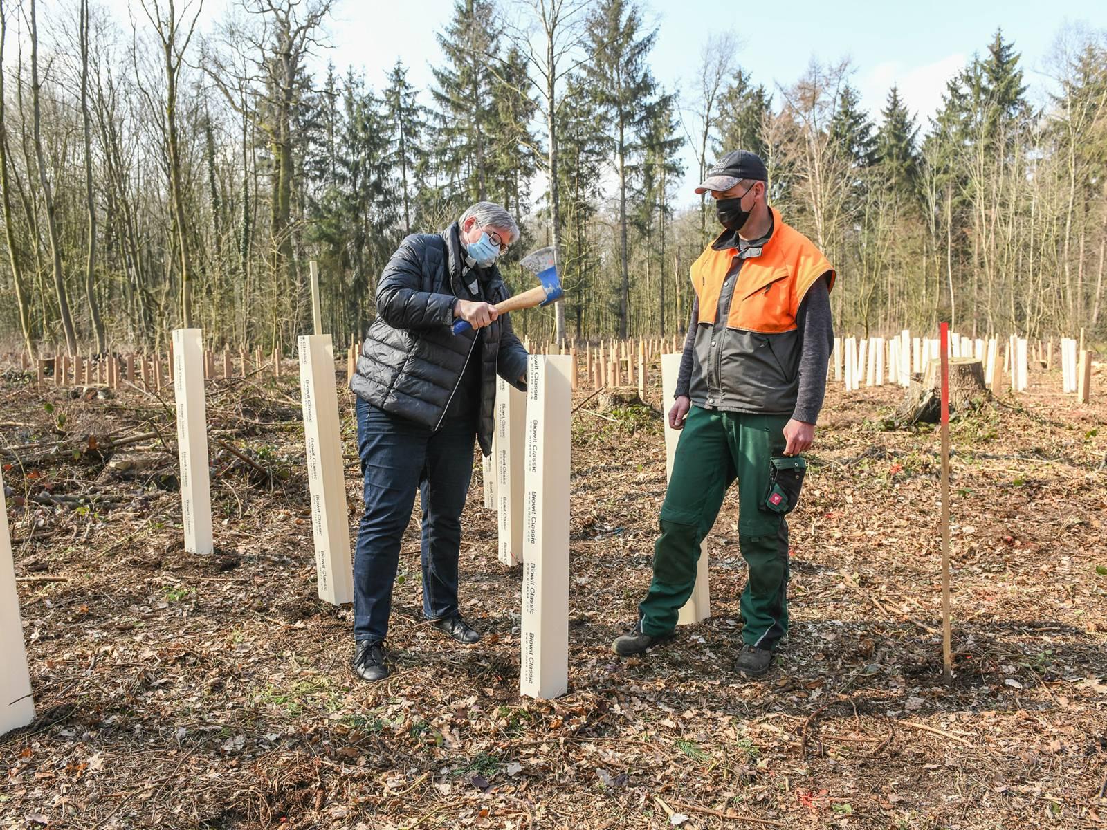 Eine Frau und ein Mann pflanzen Bäume
