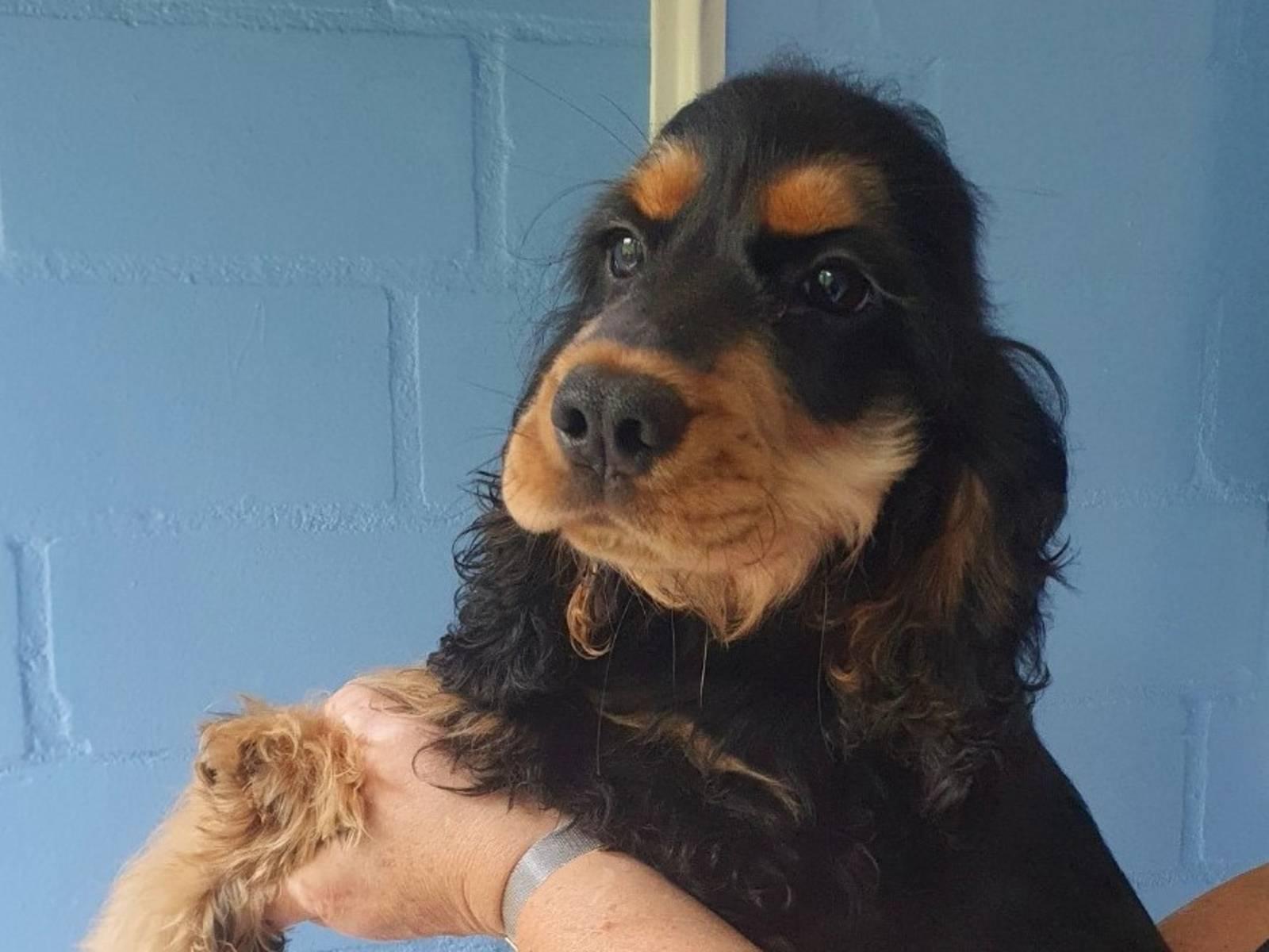 Schwarz-brauner Hund auf dem Arm einer Person
