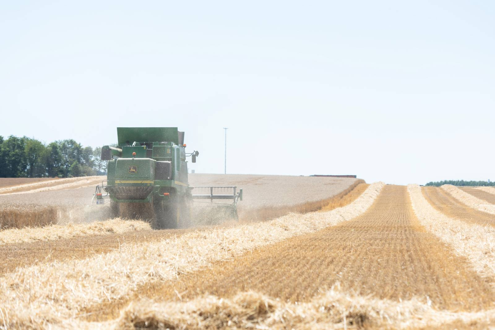A combine harvesting the wheat