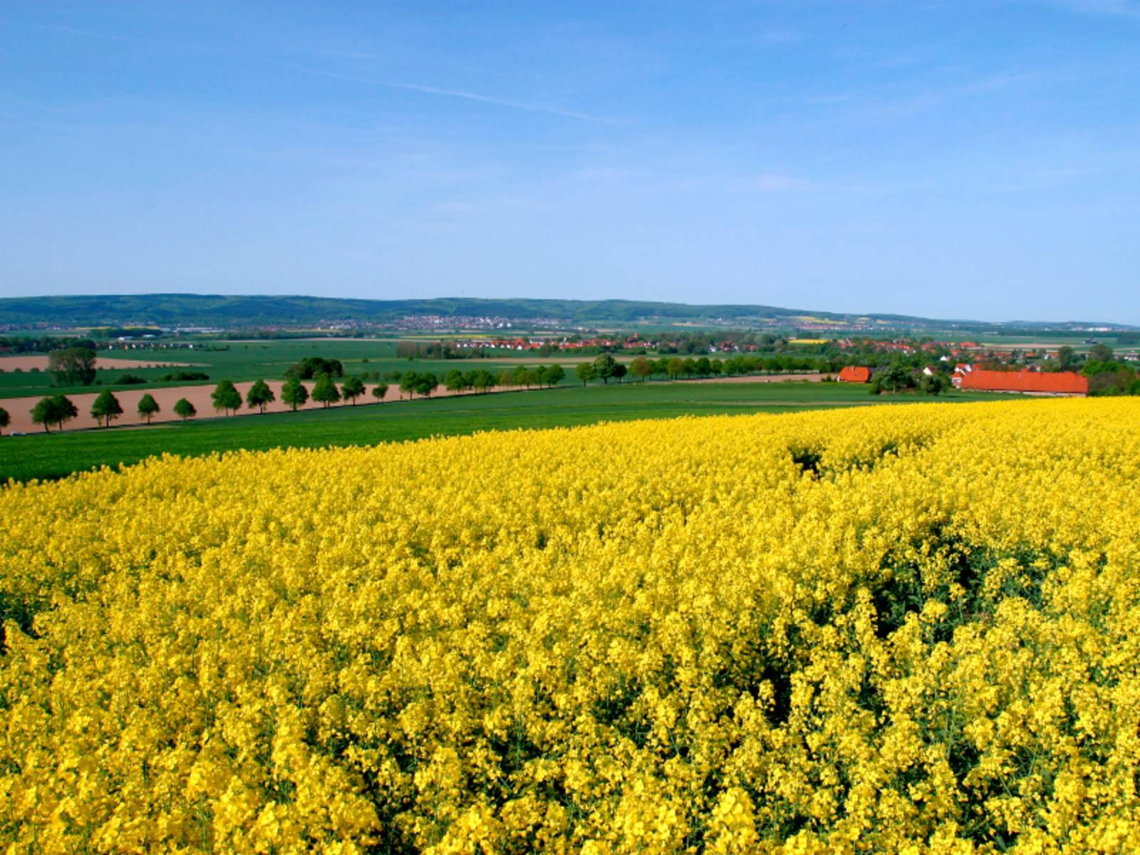Im Vordergrund ist ein gelb blühendes Rapsfeld, im Hintergrund ist hügelige Landschaft des Calenberger Landes zu sehen.