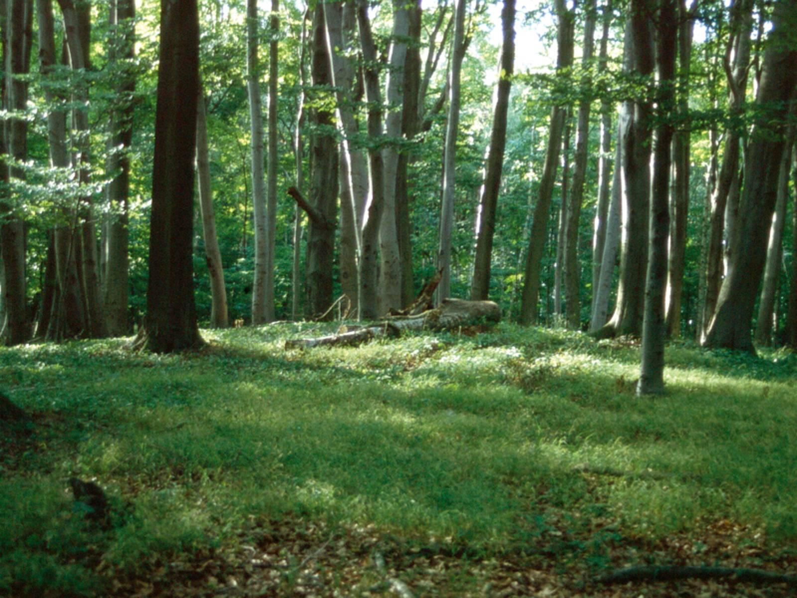 Grasboden im lichten Laubwald