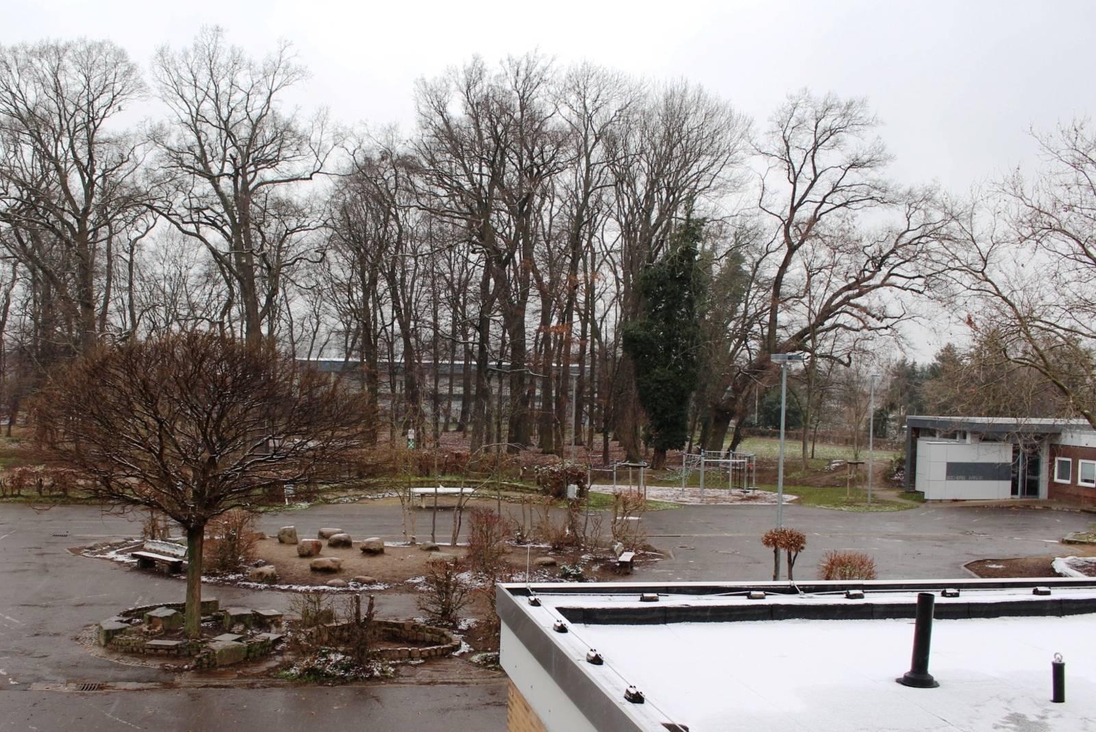 Schulgelände mit Bäumen im Winter