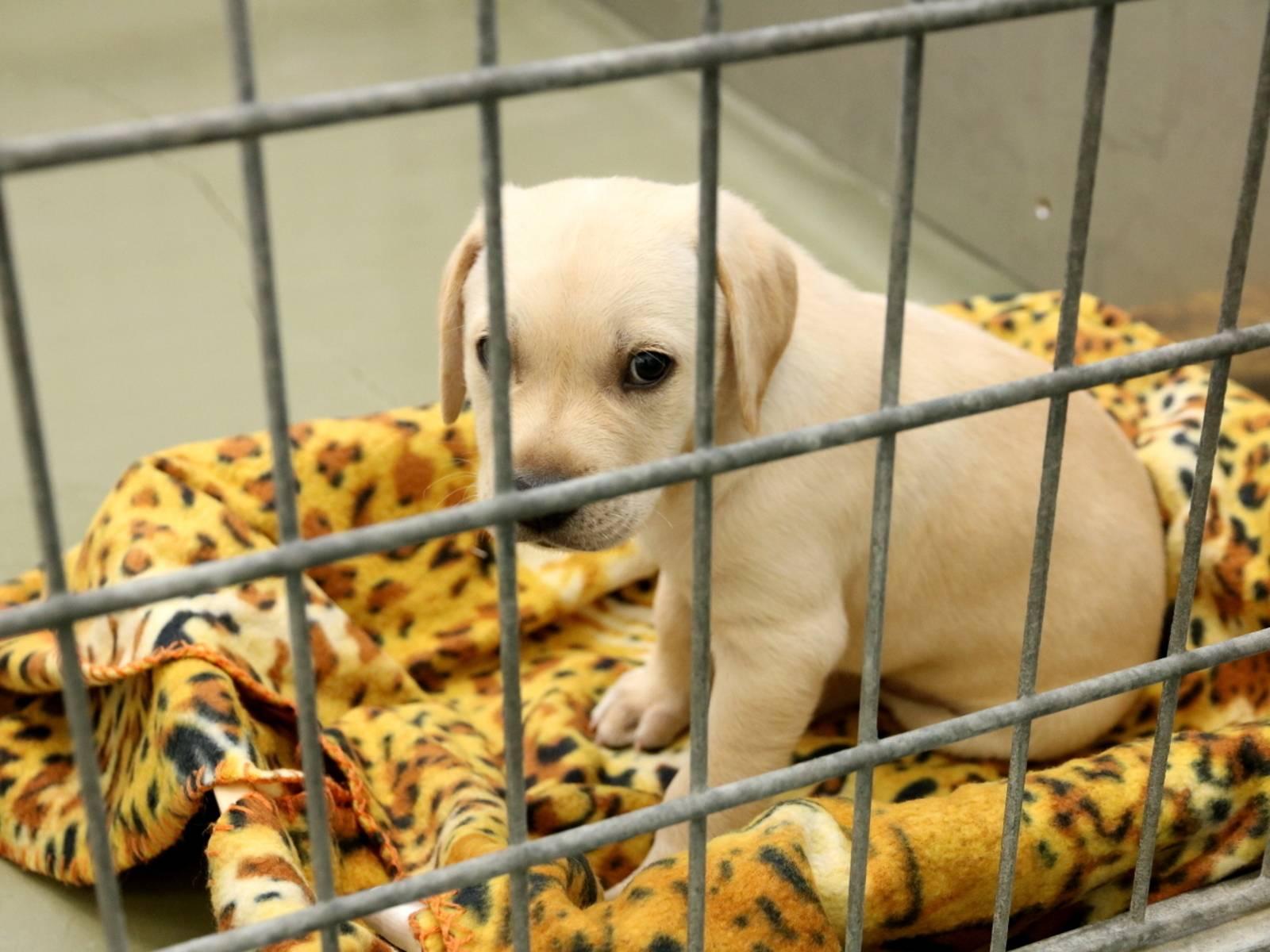 Hundewelpe hinter Gittern.