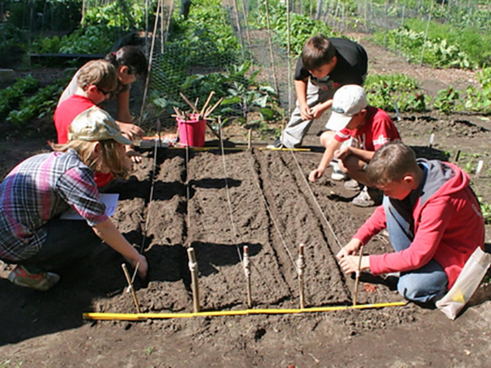Kinder knieen an einem Gemüsebeet, an dem verschiedene Saatreihen durch Stöcke und Schnüre gekennzeichnet sind, und säen Gemüsesamen ein.