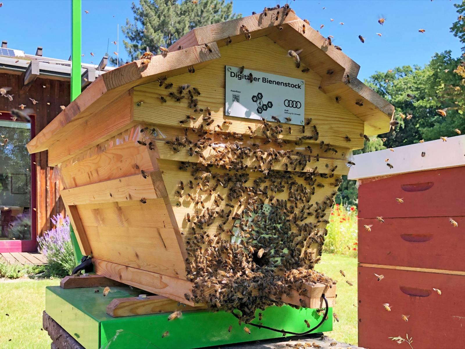 Ein Bienenstock, auf dem zahlreiche Bienen sitzen.