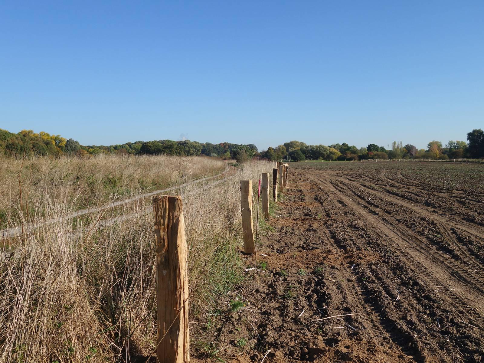 Ackerfläche, die in Grünland umgewandelt wird