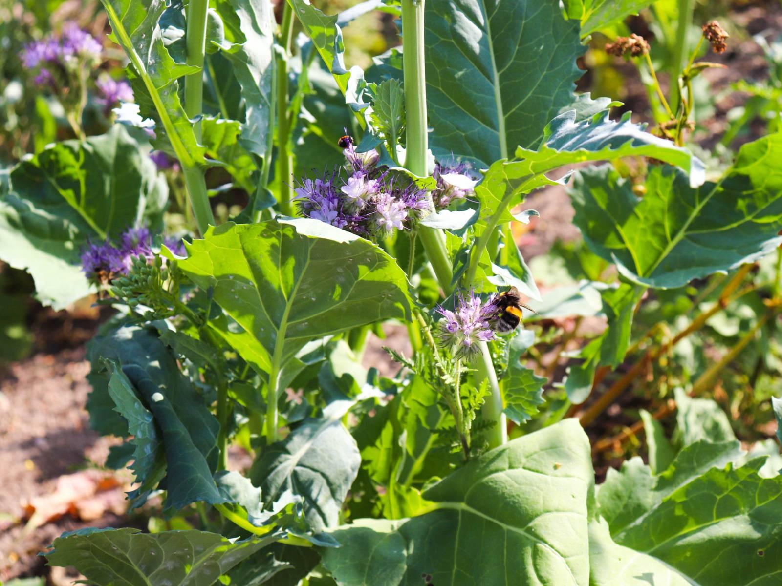 Bienen auf einer Blumenwiese.