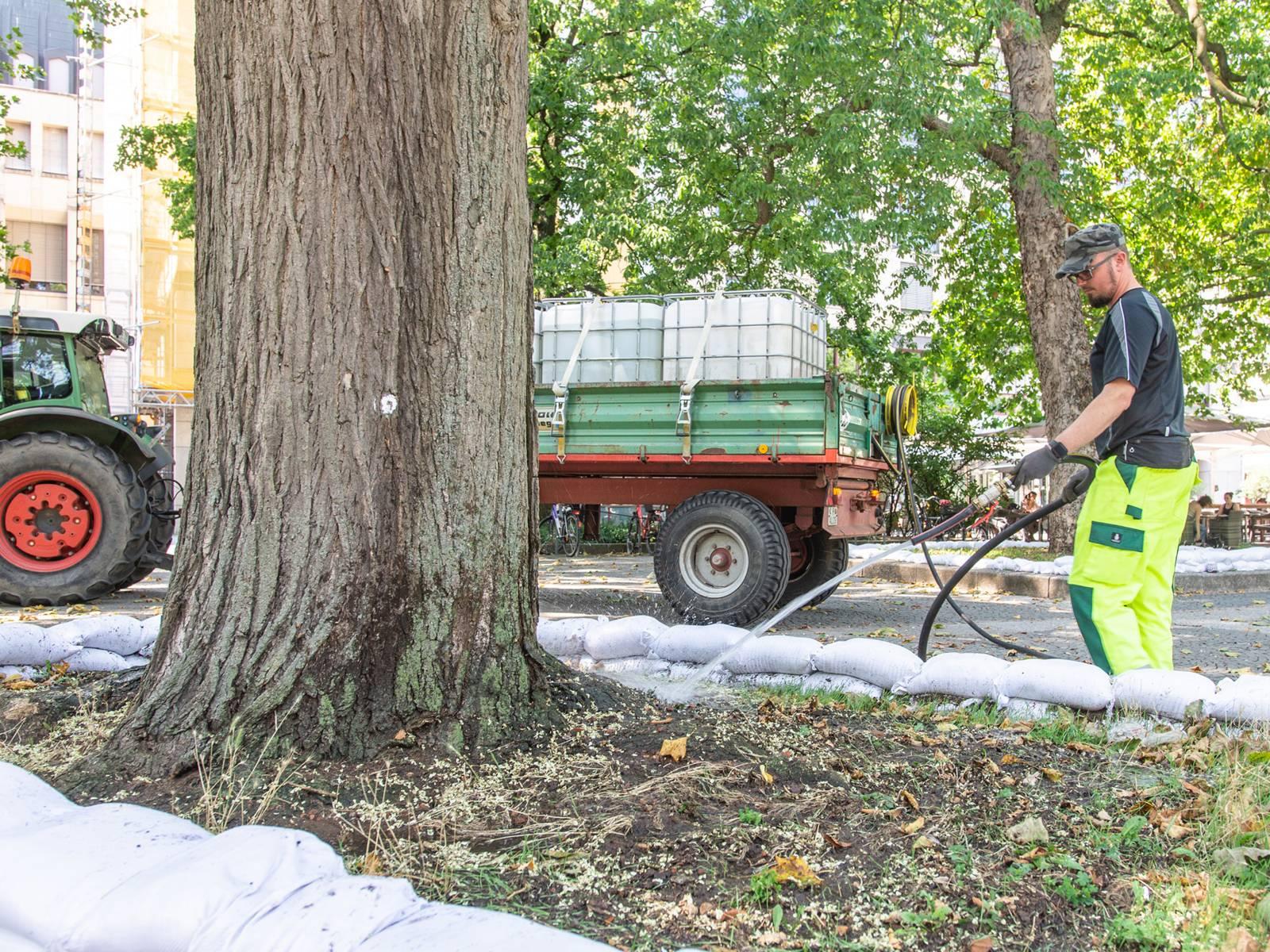 Ein Mann bewässert mit einem Gartenschlauch einen Straßenbaum