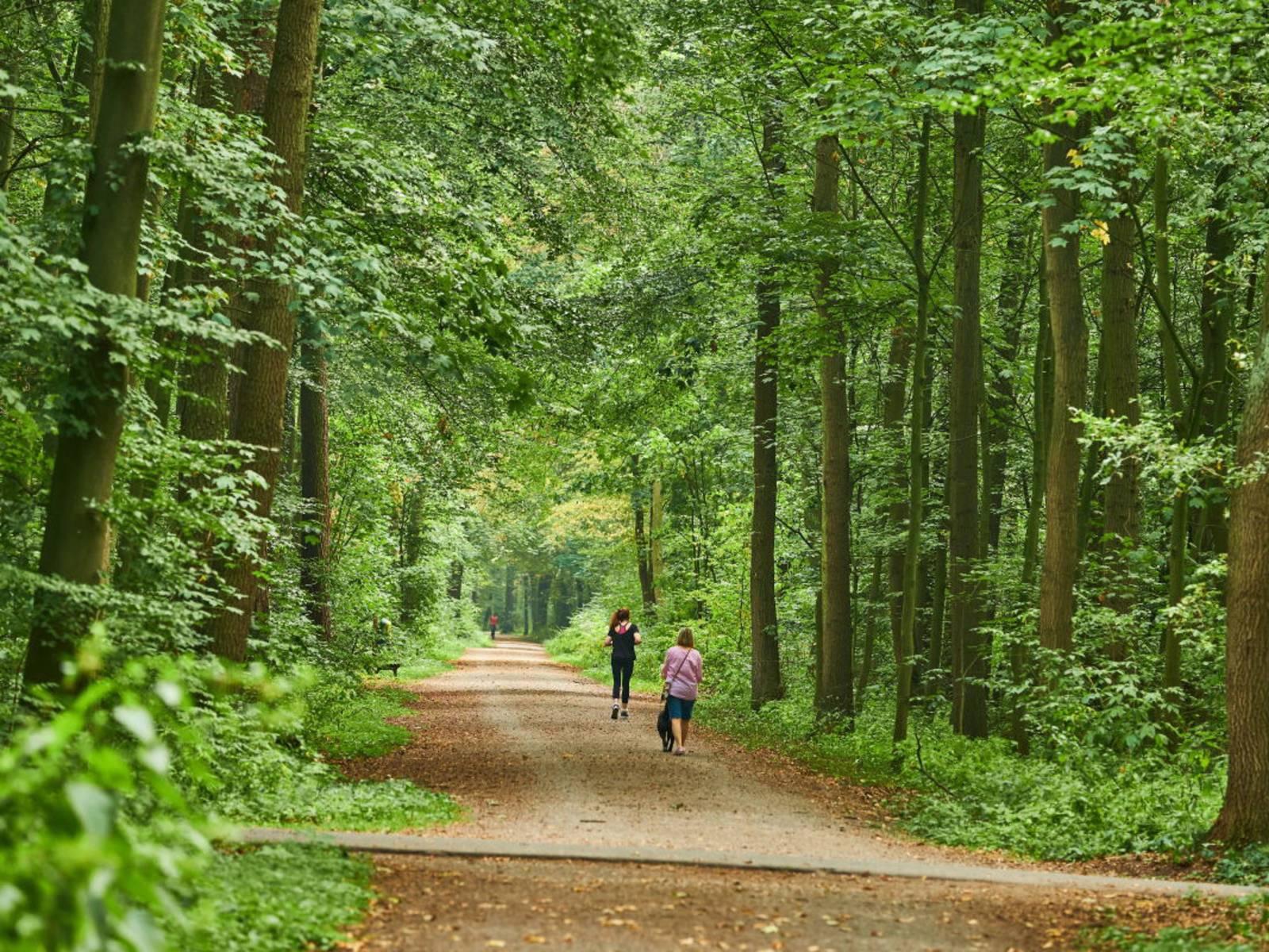 Drei Personen laufen oder gehen über einen Weg durch den Stadtwald Eilenriede