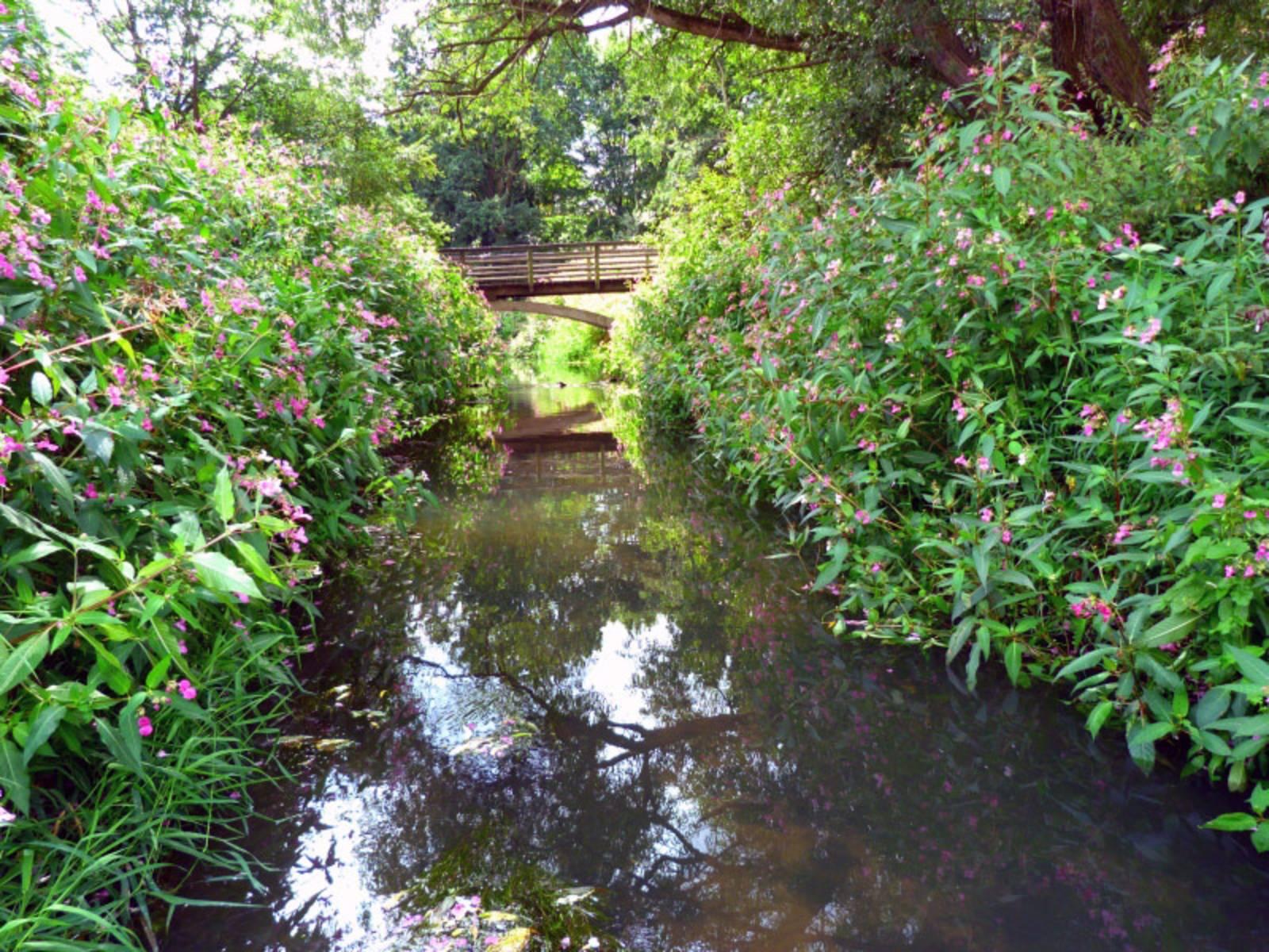 Ihme-Bach mit Springkraut am Ufer und Holzbrücke