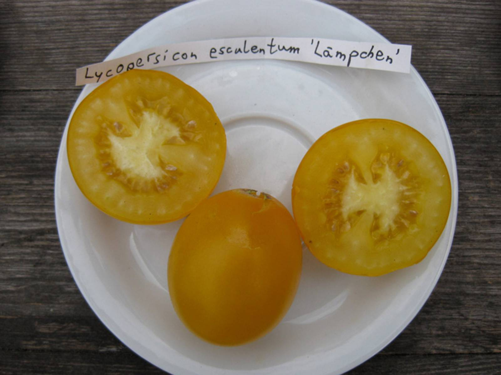 """Tomaten der Sorte Lycopersicon esculentum """"Lämpchen"""" auf einem Teller"""