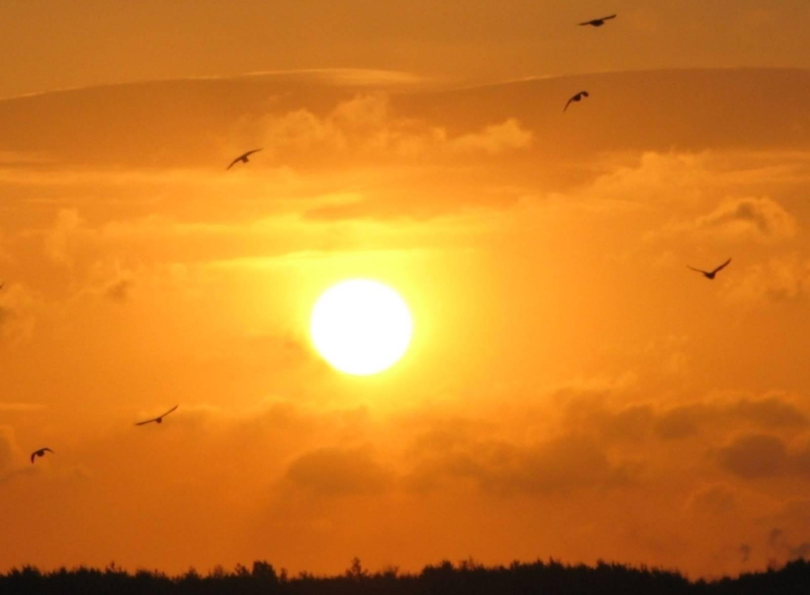 Sonnenuntergang mit Vögeln