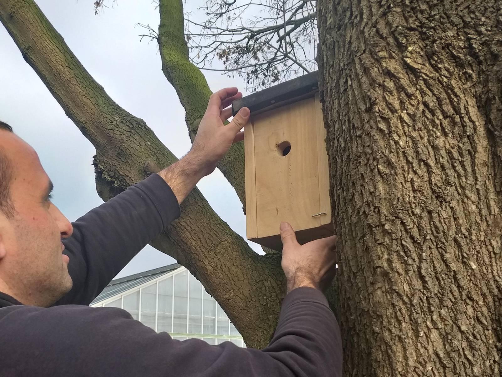 Mann, der ein Vogelhaus im Baum platziert.