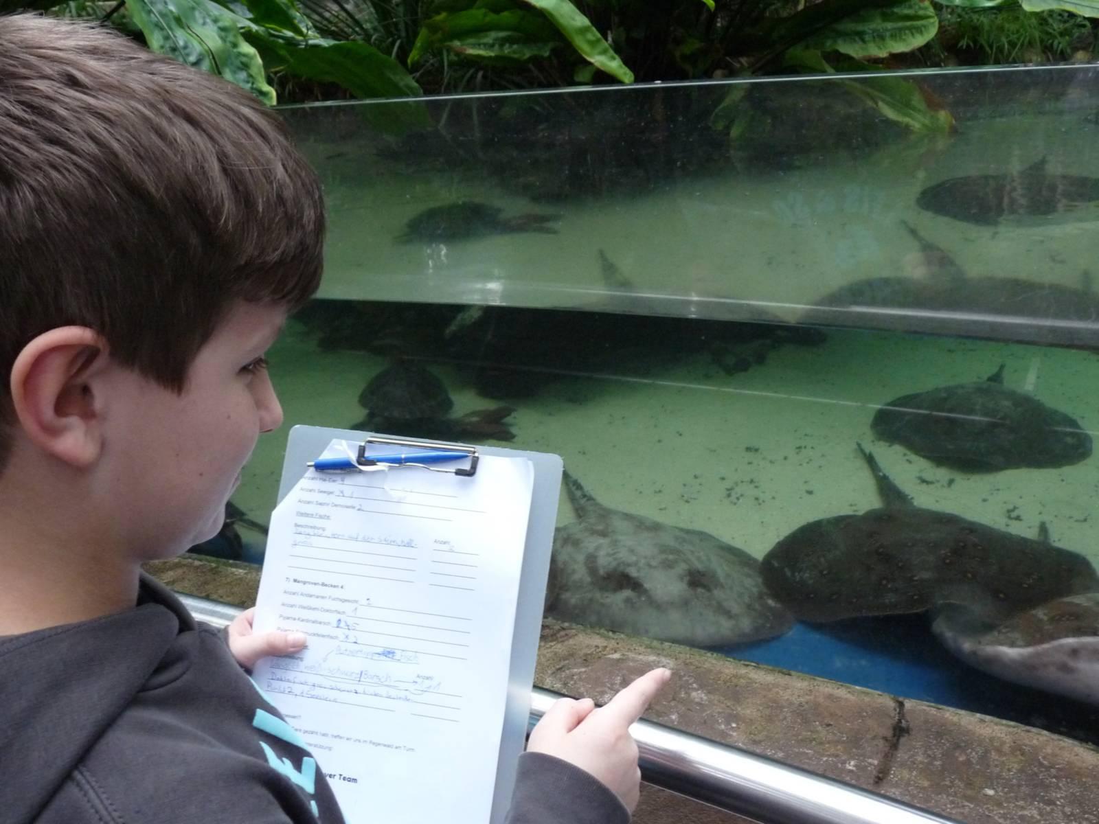 Junge vor Aquarium mit Rochen.