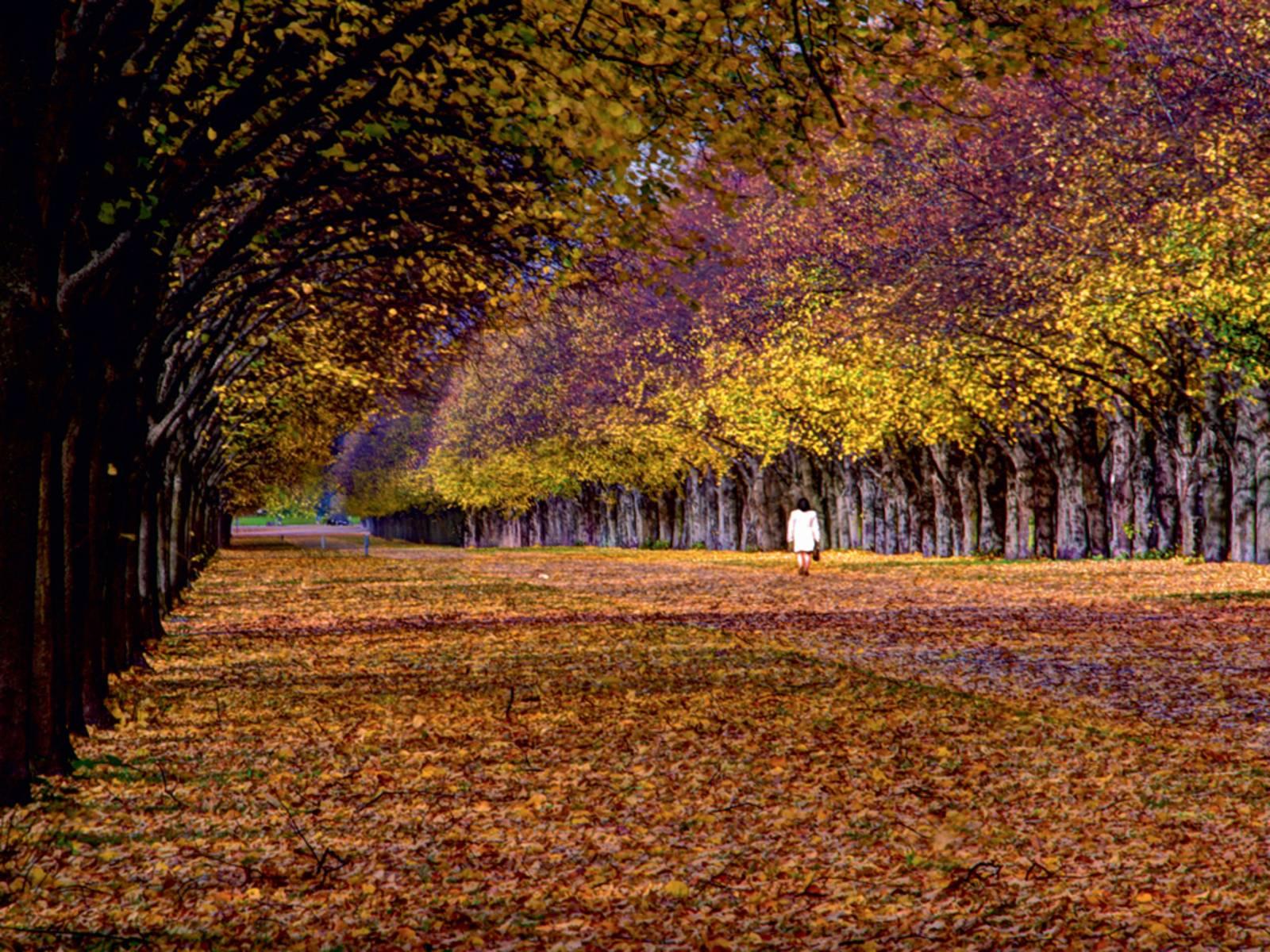Eine Allee im Herbst.