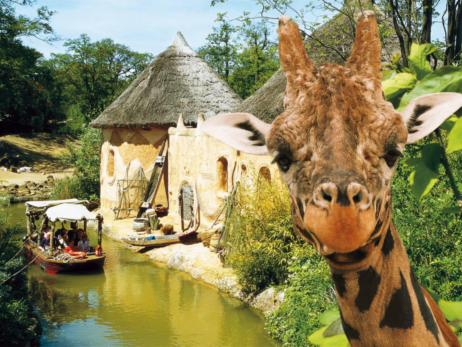 Szene im Zoo: Menschen auf Bootsfahrt und eine Giraffe.