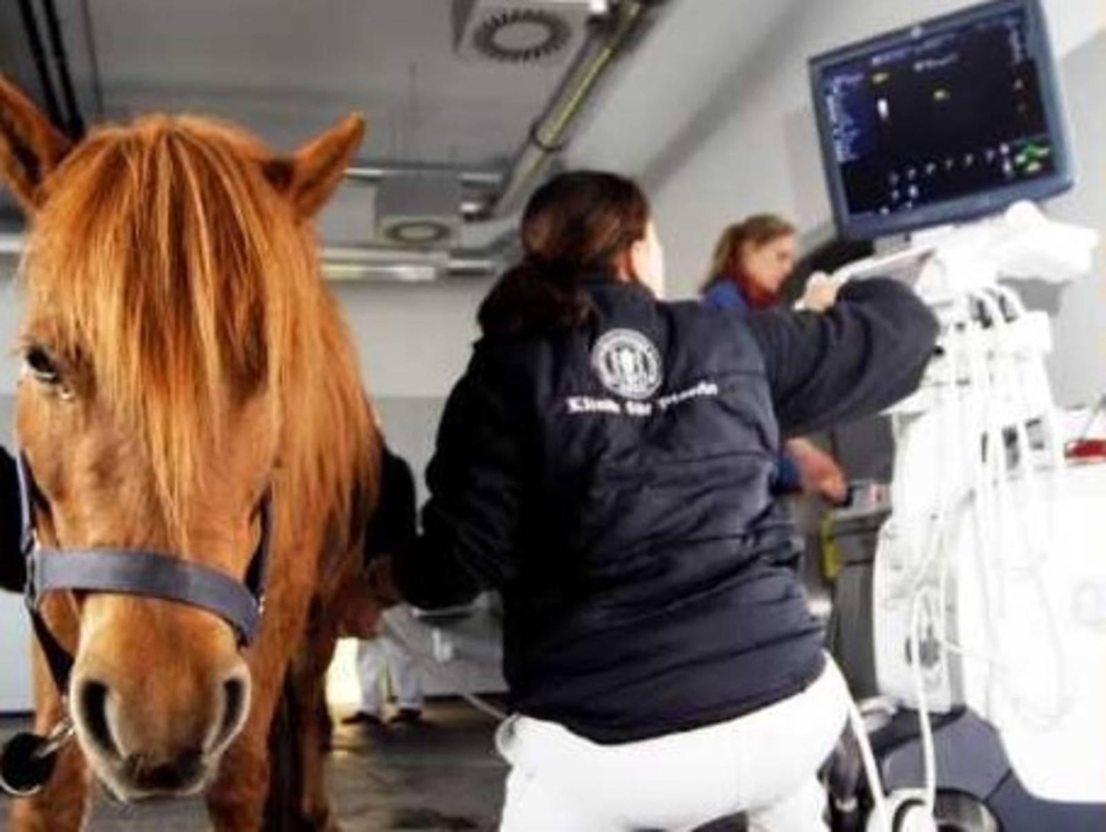 Klinikraum mit einem Pferd und zwei Frauen