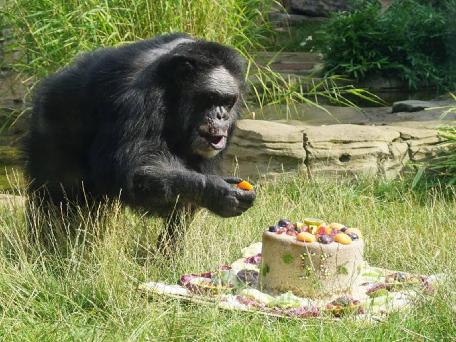 Affe mit Torte