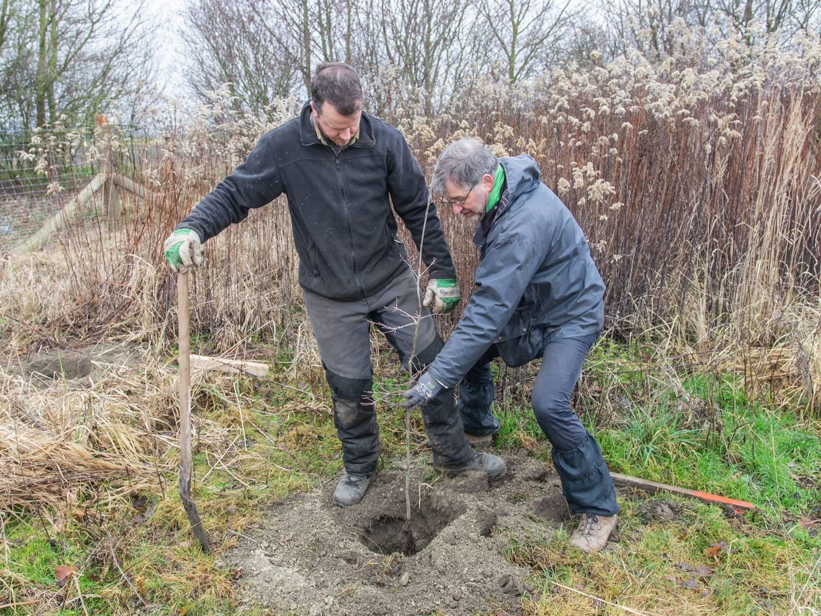 Zwei Männer pflanzen einen Baumsetzling