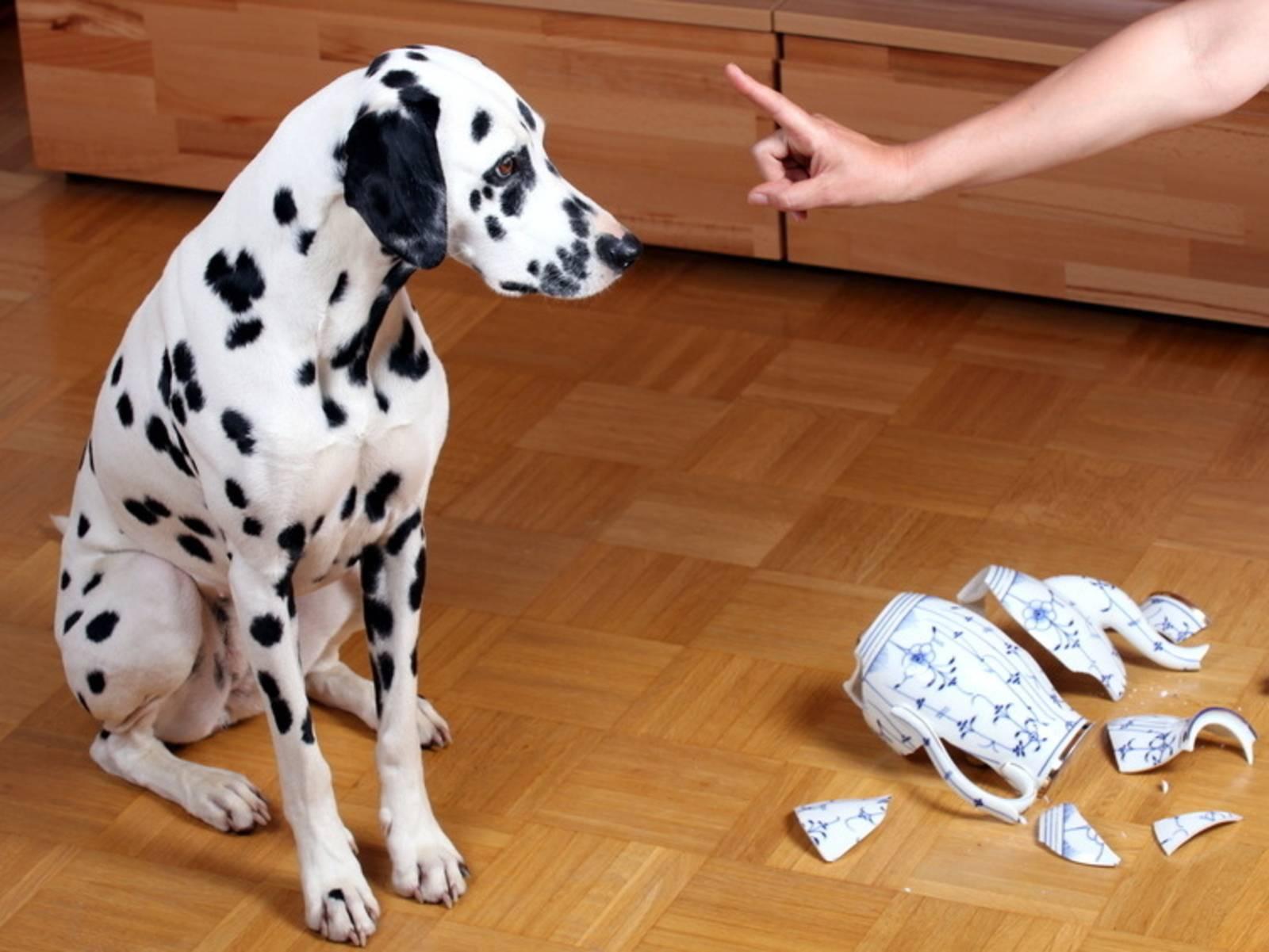 Warum machen Hundeschulen Sinn?