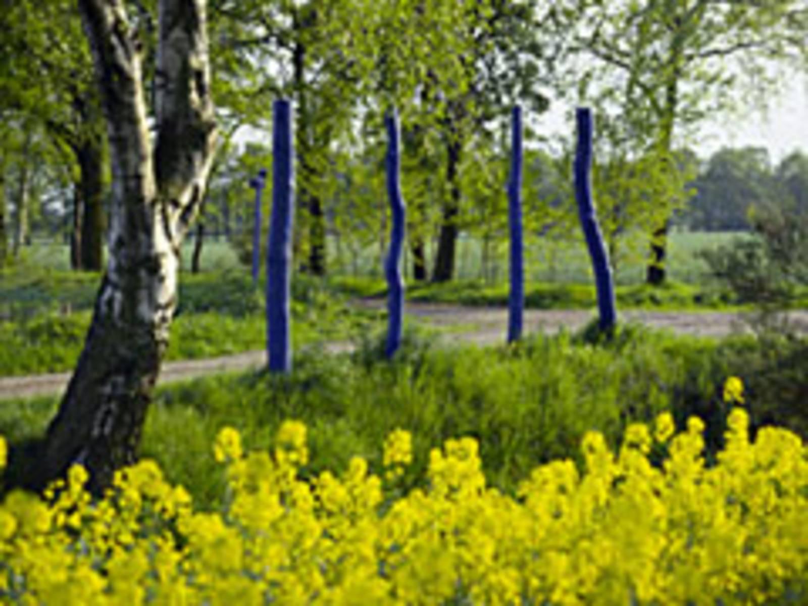 Blick aus einem Rapsfeld heraus auf einen mit blauen Pfosten gekennzeichneten Radweg