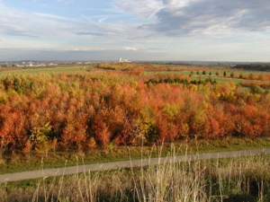 Blick über die herbstliche Landschaft am Kronsberg mit rotgefärbten Laubbäumen