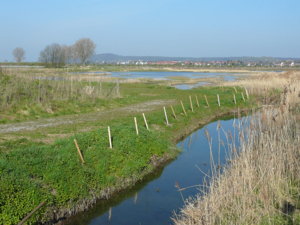 Bachlauf, im Hintergrund eine Teichlandschaft