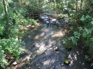 Flacher Fluss mit Steinen in einem Waldstück