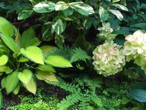 Grünpflanzen im Garten.