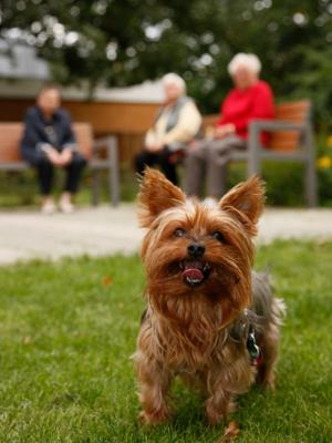 Hundebesuch im Willy-Platz-Heim