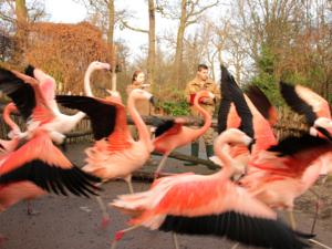 Zwei Menschen zählen Flamingos.