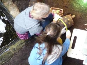 Mädchen vermessen Schildkröte.