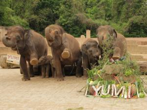 Eine Elefantenherde.
