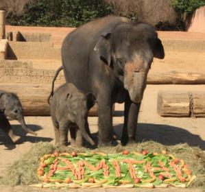 Elefantenkuh mit Elefantenkalb
