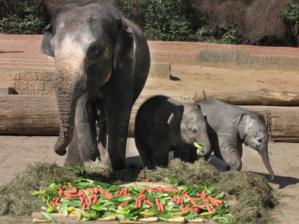 Elefantenkuh mit zwei Elefantenkälbern