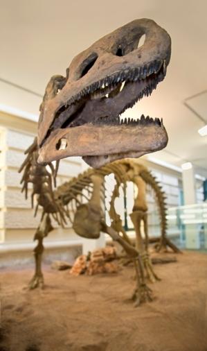 Das Skelett eines Dinosauriers
