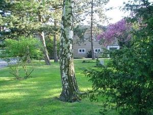 Baum vor Verwaltungsgebäude