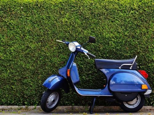 Ein blaues Moped vor einem grünen Busch