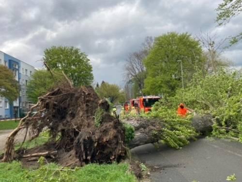 Ein großer Baum ist durch einen Sturm auf eine Straße gestürzt.