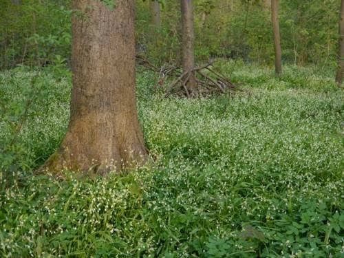 Ein Baum, umringt von zahlreichen Pflanzen.