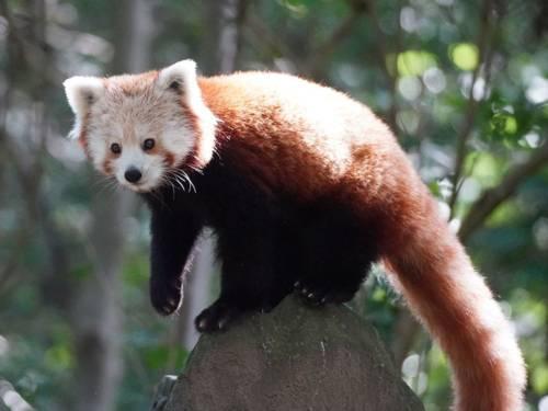 Ein Tier mit rotem Fell