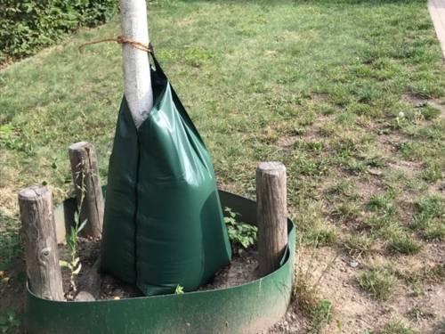 Grüner Kunststoffsack, der um einen Baumstamm gebunden ist und ein grüner Kunststoffring, der mittels dreier Holzpflöcke am Boden um den Stamm gespannt ist, um das Abfliessen des Wassers zu verhindern.