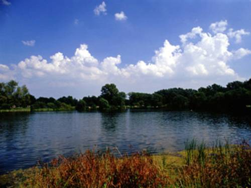 Der Ricklinger Kiesteich, umrandet von Wiese und Bäumen, blauer Himmel.