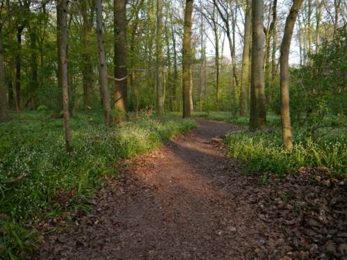 Ein Trampelpfad durch den Wald.