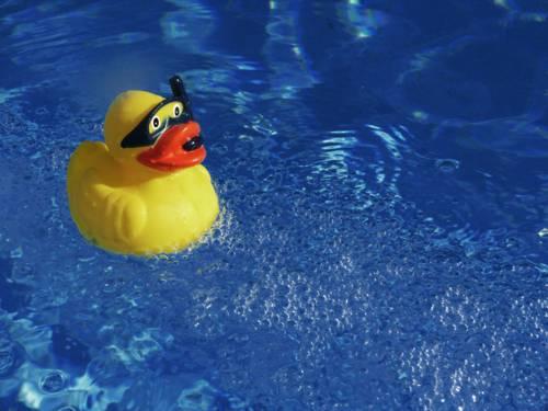 Eine gelbe Gummiente mit Schnorchel und Taucherbrille schwimmt auf dem Wasser.