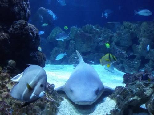 Ein Ammenhai im Ozeanbecken.