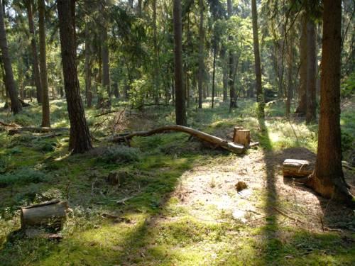 Waldboden mit Totholz.