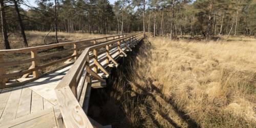 Holzbrücke im Moor