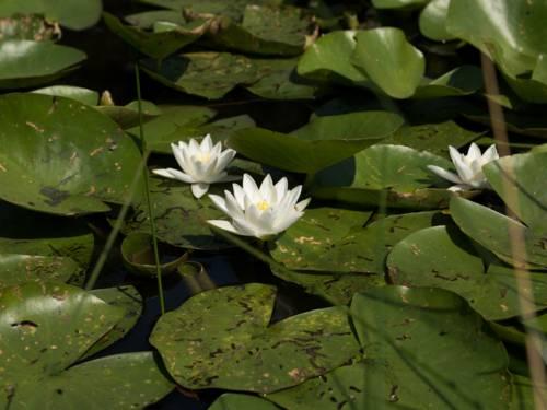 Grüne Blätter und weiße Blüten